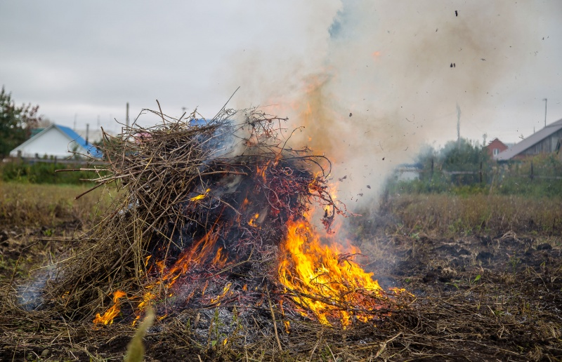 Brûlage des végétaux
